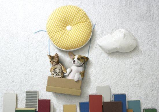 Фотомодели-котики